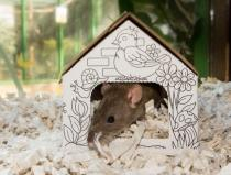 Rat in small house 2 3