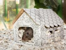 Rat in small house 2