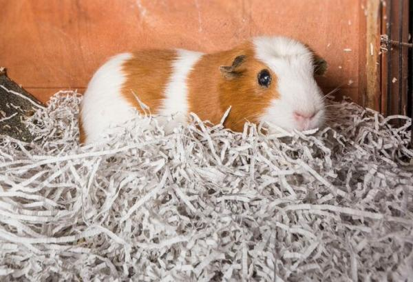 Newspaper Bedding Norfolk Industries, Can You Use Shredded Paper For Hamster Bedding